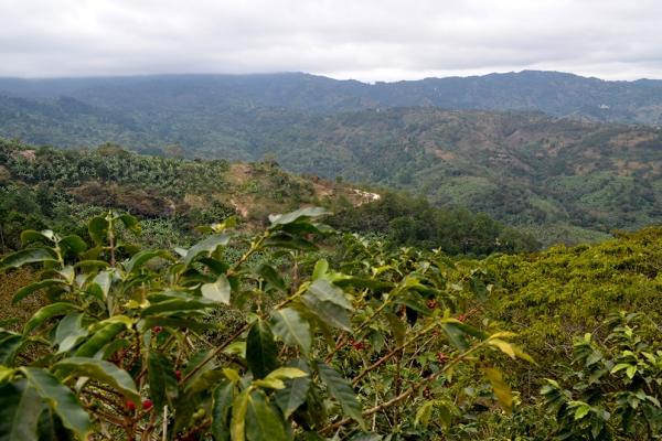 bosques-03DD45E2F0-7977-8044-47B7-8446C8ADFDDA.jpg