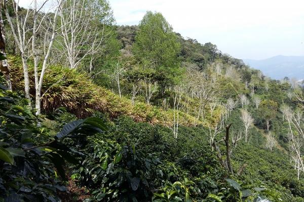 bosques-042868B73E-5815-413F-805B-DE6626C0D553.jpg